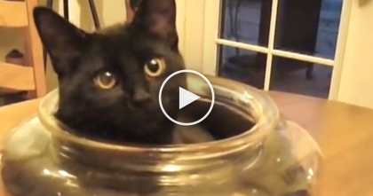 Kitten Discovers A Glass Bowl And Just Can't Resist The Urge… This Is SOO Funny, He Loves It!!
