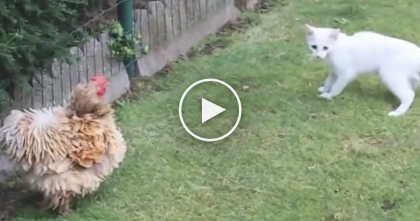 Kitten Noticed Someone New, But Then… You'll Never Guess What's Happening Now, OMG!!