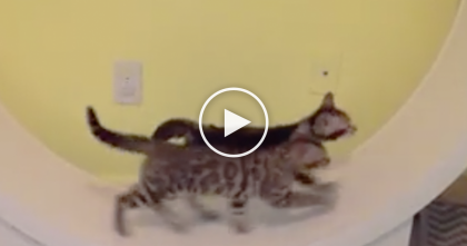 Kittens Jump On This Wheel, But If You Keep Watching, You'll See It… Absolutely Hilarious!!