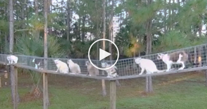 Kitties Wanted To Go Outside But It Wasn't Safe… Now Watch What They Did, It's GENIUS…
