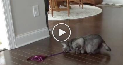 Kitty Finds Her Favorite Toy, But What She Does With It? Keep Your Eyes On Her Mouth…Lol OMG!