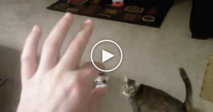 Kitty Is SOO Excited About Playing Fetch, But Just Listen To The Sound He Makes… LOL!!