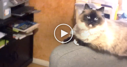 Kitty Jumps Up On The Chair, But Then… He Knows What's Coming Next… Awwwww, TOO Cute!!