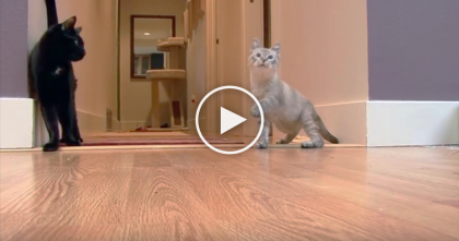 Kitty Keeps Falling Over, But When You Realize Why?? This Will Warm Your Heart… Amazing!