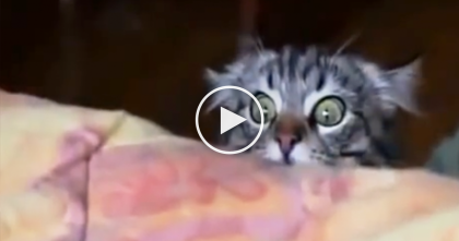 Kitty Sees Something On The Bed, But His Expression Is Something Else… OMG, It's Hilarious!