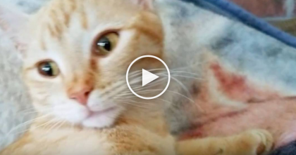Kitty's Tummy Was Extremely Swollen, But When They Checked Back The Next Day… OMG?!