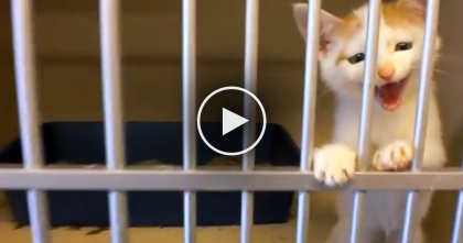 Little Kitten Starts Meowing At The Shelter, But When This Guy Notices… This Is Just TOO Cute!!