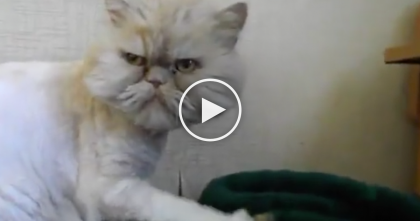 People Think He Looks Angry, But If You Keep Watching… This Cat Is The 'Coolest' Cat EVER!