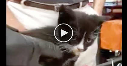 She Heard Meowing Coming From The Car, So Took It To The Mechanics, But Then… Oh My GOODNESS.