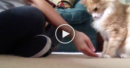She Started To Teach This Cat Some Tricks, But When I Saw The Results…WOW, Can You Believe It?!