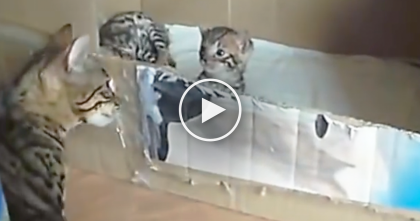 She's Got Something To Tell Her Little Kitten, But Just WATCH How She Does It… OMG, Awwww!!