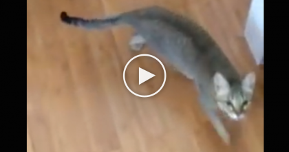 She's Singing A Song, But Watch How The Cat Reacts… I Didn't Expect The Cat To Do THIS…