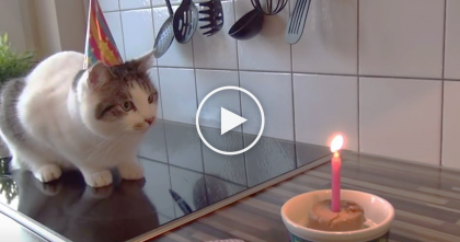 They Threw Kitty A Birthday Party, Now Watch What What Happens When He Discovers His Gift…