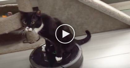 Two-Legged Kitty Doesn't Like His Tiny Wheelchair, So This Happens Instead… OMG, It's Genius!!