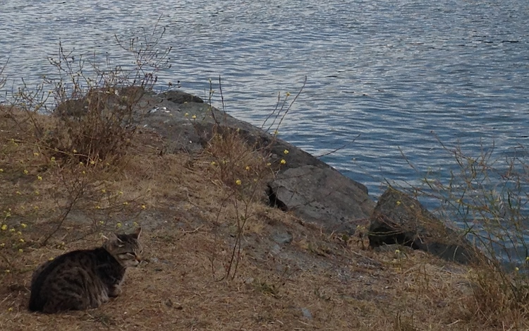 The-Meow-Post-jetty-cats-living-among-rocks-gold-beach