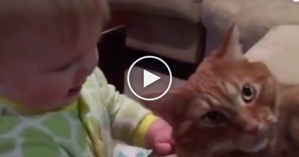 Baby Loves This Kitty So Much She Tries To Eat Him…This Is Unexpected, LOL Just Watch!