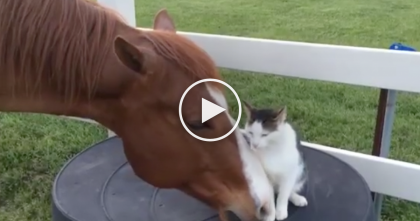 Cat And Horse Have The Sweetest Relationship, Watch The Reaction When They're Together…