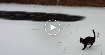 Cat Discovers Snow For First Time Ever, But When She Puts One Paw In It?? This Is Unexpected…LOL