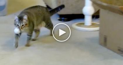 Cat Finds A Hidden Toy, But Watch What He Does With It… WOW, This Cat Is Talented!!