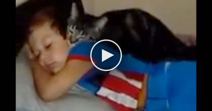 Cat Missed His Best Friend, Now Watch The Reaction When He Comes Home… THIS Is SOO Adorable!!