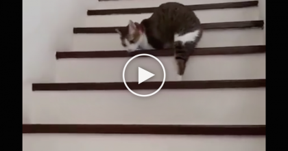 Cat With Amputated Legs Tackles The Stairs, But Watch How He Does It… This Is Truly Inspiring, WOW.