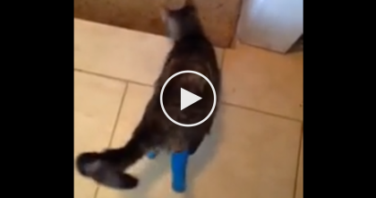 He Coaxes The Cat To Come Down The Stairs, But I'm Speechless About What Happens Next…