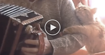 He Starts Playing The Accordion, But Watch How The Cat Reacts To It… This Is SOOO Cute!