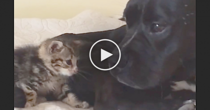 Rescue Kitten Needed Someone To Love Him… Now Watch What The Dog Started Doing!