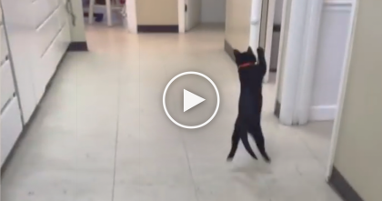She Threw A Ping Pong Ball, But Watch The Kitten… How He Reacts Is TOO Funny, LOL!!