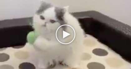 She Throws A Ball To This Cat, But What He's Able To Do?? I Couldn't Believe My Eyes, WOW…