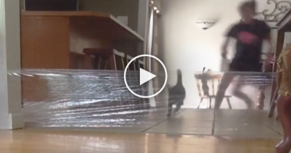 She Tries To Play A Rude Prank On Her Cat, But Then… She Gets EXACTLY What She Deserved, LOL