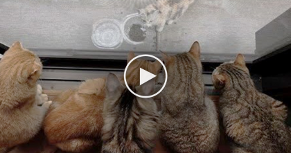 They Noticed Their Cats Watching Something, But When They Saw What It Was?? …Just In Time!