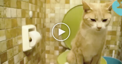 This Cat Uses The Toilet, But What He Does Next?? KEEP Watching Till The End… Omg, WHAT?!