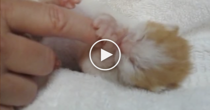Tiny Kitten Is SOO Cute, Just WATCH And It'll Steal Your Heart… Oh My Goodness, It's Priceless!