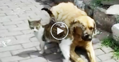 Two Kitties Find New Furry Friends, But When You See Them All Together?? AWW… Just Watch