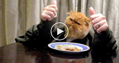 When This Cat Gets Hungry, You've Got To See What His Human Ends Up Doing…So Funny And Cute LOL