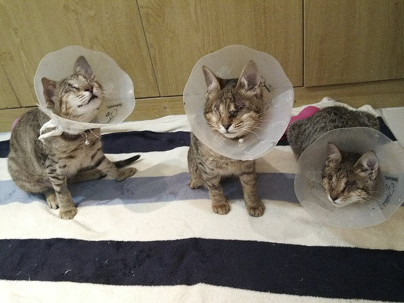 People Ignored Three Blind Cats, They Weren't Adopted-2