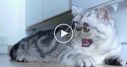They Got A Kitten, But Look At His Eyes Now… Nobody Expected To See THIS. Just Watch, OMG.