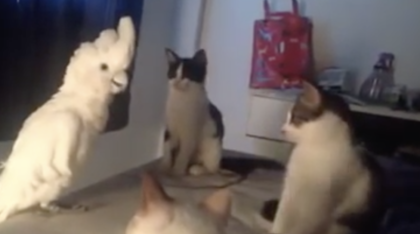 Parrot Walks Up To A Group Of Kittens, But Turn Up Your Volume… NOBODY Expected This Reaction!