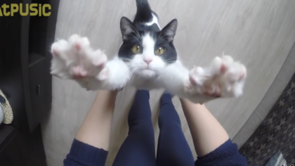 """Rescue cat greets owner every day and says """"Thank You"""" in the SWEETEST way ever… Awwwwww!!!"""