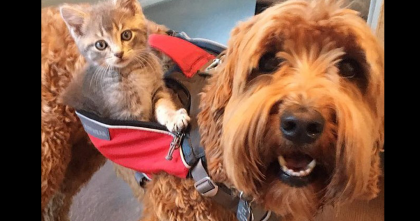 Abandoned Kitten Was Rescued, But Now… See What He Does With His New Best Friend, Adorable!!