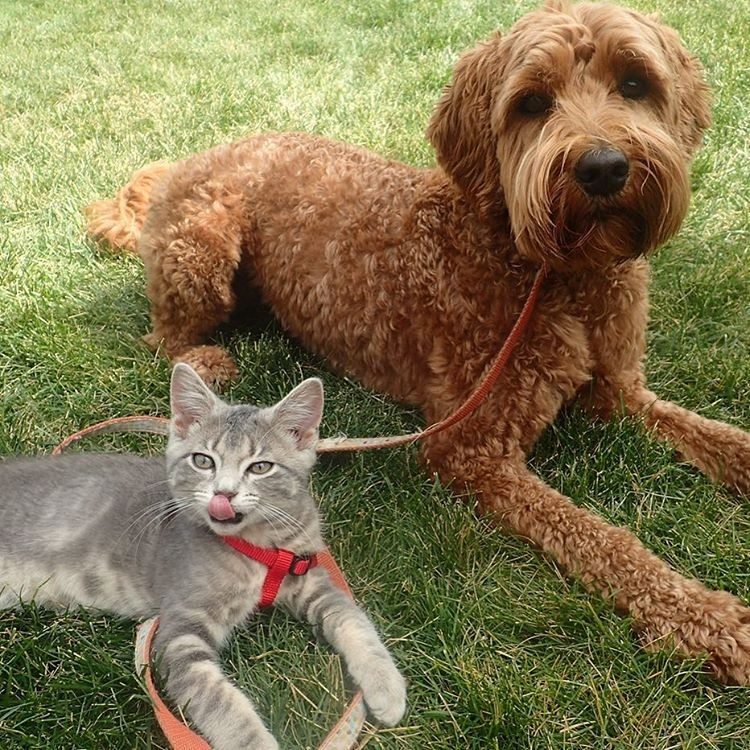 abandoned-kitten-was-rescued-but-now-see-what-he-does-with-his-new-best-friend-adorable-5