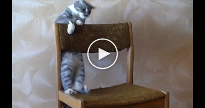 Cat Discovers An Old Chair, But Then Goes Crazy… Just Watch His Reaction, It's Hilarious, LOL!!