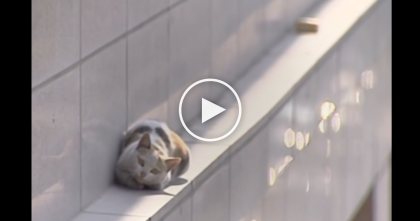 Cat Falls From Second Story, Rescuers Try To Help, But Keep Watching Till The End… WOW.