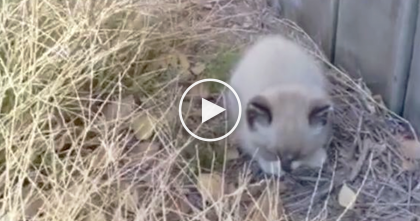Cat Gets His Attention By Meowing Loudly, But When He Discovers It… Just WATCH The Ending!