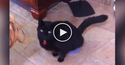 Cat Gets Mad At The Dog, But Then Takes Revenge In The Weirdest Way I've Ever Seen… OMG, NOOO!!