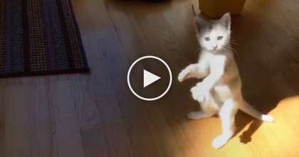 Kitten Steps Into The Sunlight, Then Starts Swinging His Paws Around…LOL, What Is Happening?!
