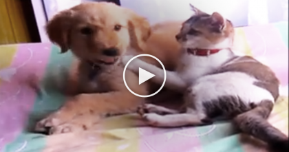 Cat Meets The Puppy, But Then Gives Her A POWER Wash.  This Is Awww-dorable, Watch!