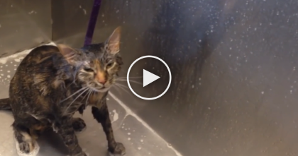Cat Must Have A Bath, But Listen To His Response…OMG, I Can't Believe The Sound He Makes!