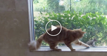 Cat Sees Squirrel Out The Window, But Just Can't Resist The Urge… LOL, His Reaction Is Hilarious!!